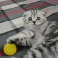 А у нас сегодня кошка родила вчера котят…