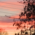 Фоторепортаж «Зимнее утро»