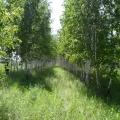 Лето в Сибири