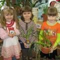 Экологическое воспитание. Уголок природы