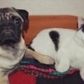 Мои животные