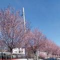 В Краснодар пришла зима!