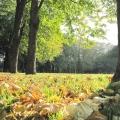 Венок из осенних листьев. Мастер-класс