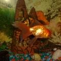 Золотая рыбка, исполни желание!