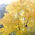 Листья жёлтые над садиком кружатся…