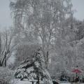 Зима. Какое это чудесное время года!