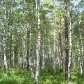 Ещё один уголок Иркутской области— «Тальцы»
