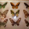 Коллекция насекомых в детском саду