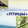 Презентация по лексической теме недели «Птицы»