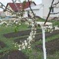 Весна, весна!!! Природа проснулась, дышит, живёт!!!