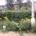 Функциональное оформление участка детского сада в летний период