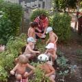Проект «Маленькие огородники»