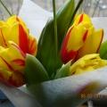 Как прекрасны весенние цветы!