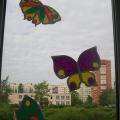 Такие разные бабочки