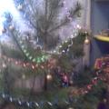 Как необычно украсить елочку к Новому году
