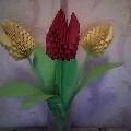 Тюльпаны для мамы.
