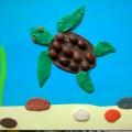 Интегрированная НОД «Знакомство с черепахой» (старшая группа)