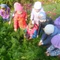 Проект с детьми подготовительной группы «Овощи— наши друзья»