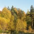 Прогулка для души или как мы отдохнули в осеннем лесу