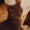 А это наша красавица— Мурёша