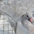 Голубь— птица мира и любви.