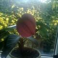 Мои орхидеи.