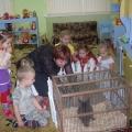 Занятие по экологии «У нас в гостях кролик— Крош».