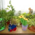 Выставка-смотр «Семейный мини-огород»