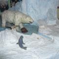 Поделки «Мир воды», «Арктика»