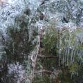 «Ледяной дождь». Пять дней спустя