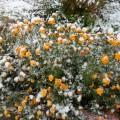 Фотоотчет «Первый снег»