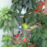 Организация предметно-развивающей среды в группе по экологическому воспитанию
