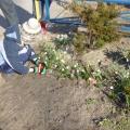 Акция «Посади первый весенний цветок»