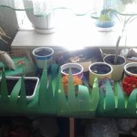 Фотоотчёт о второй неделе экологического проекта «Наш любимый огород»