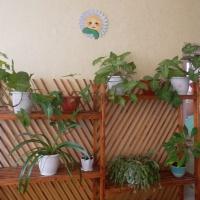 Консультация для родителей и воспитателей «Экологическое воспитание дошкольников в повседневной жизни с учётом ФГОС»