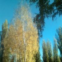 Фотоотчет по экологическому воспитанию в средней группе «Осень золотая»