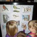 «Покормите птиц зимой». Мини-проект для детей второй младшей группы