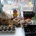 Огород на окне. Экспериментальная работа с воспитанниками второй младшей группы