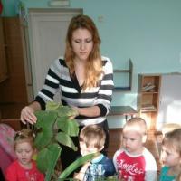 Конспект занятия по экологии «Комнатные растения»