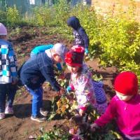 Фотоотчет «Главное достижение детского труда— сбор урожая»