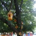 Оформление участка к летнему сезону «Сказочное дерево!»