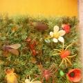 Тематическая неделя «Эти забавные насекомые». Фотоотчет