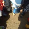 Фотоотчет о прогулке «Наблюдение за майским жуком» (средняя группа)