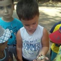 Фотоотчет «Наблюдение за насекомыми»