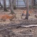 Экскурсия в зоопарк «Садгород».