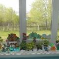 Фотоотчёт исследовательского познавательного проекта: «Чудо-огород на окошке растёт»