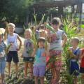 Фотоотчет «Чудо-огород на участке детского сада»
