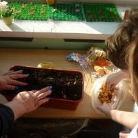 Занятие по посадке лука «Огород на подоконнике»