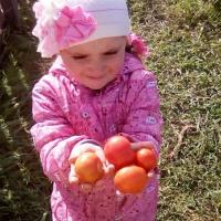 Фотоотчет «Осень, пора сбора урожая» (первая младшая)