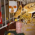 Фотоотчет о выставке детских работ «Осень на опушке краски разводила»